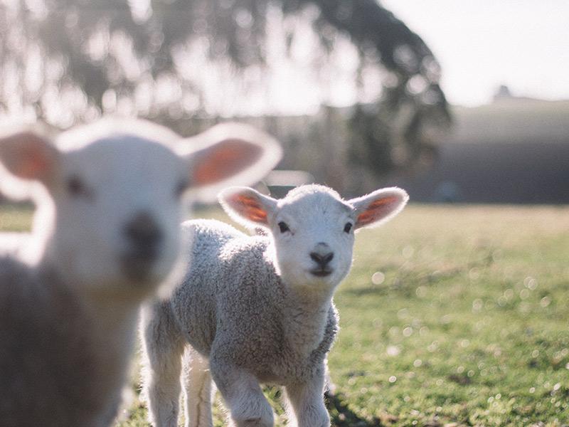 Pense-bête : La Nouvelle Zélande
