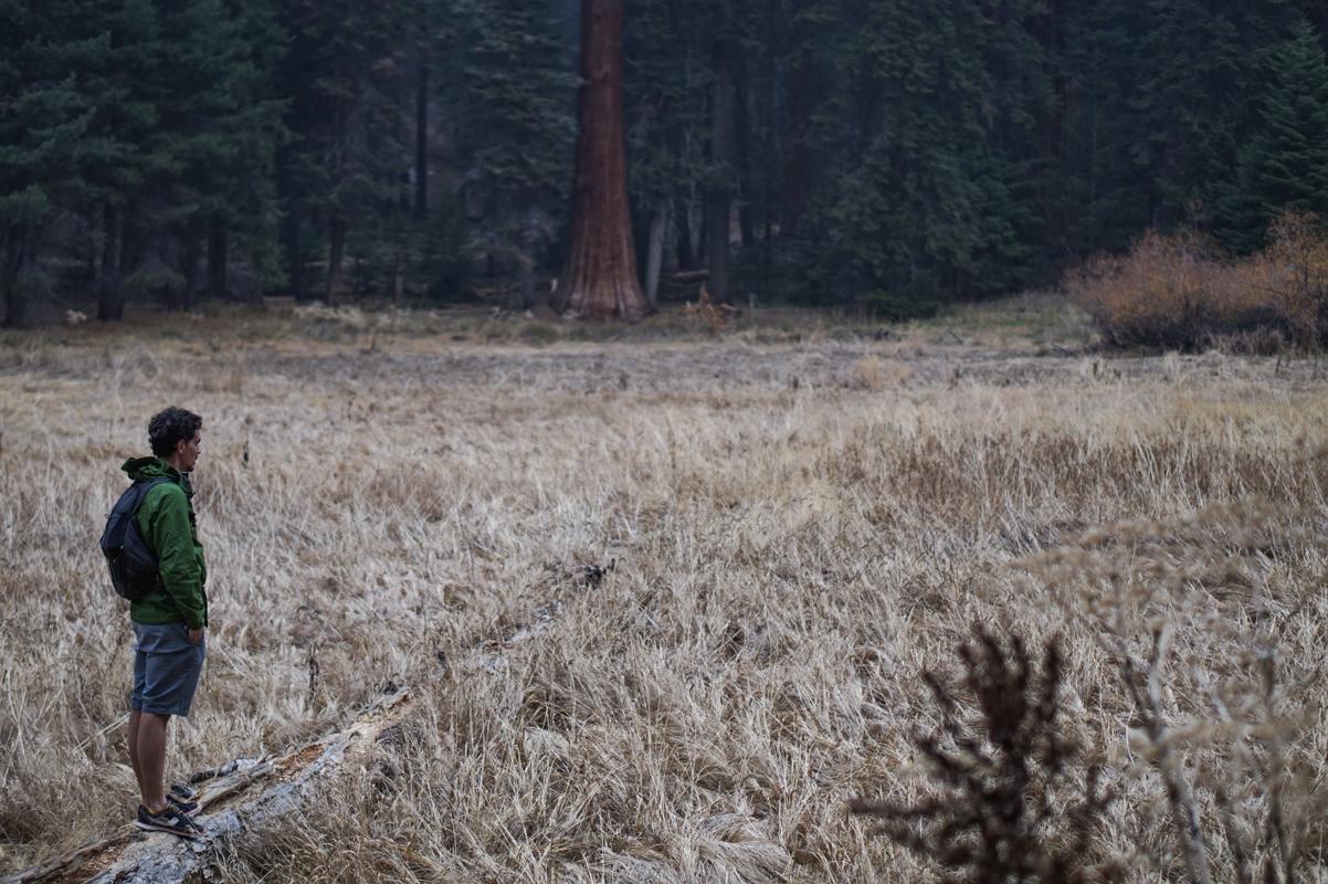 sequoia-52