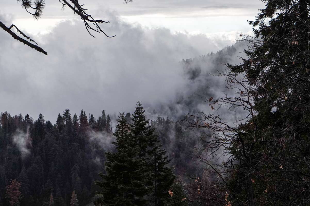 sequoia-57